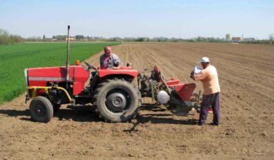 Setva kukuruza – SAVETI