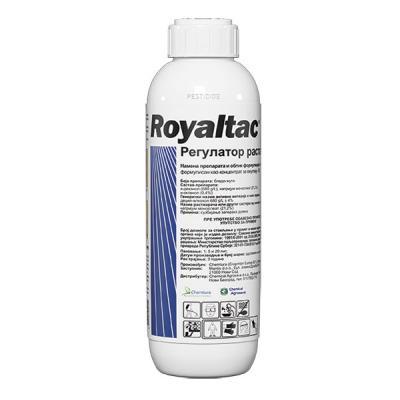 Royaltac - Regulator rasta
