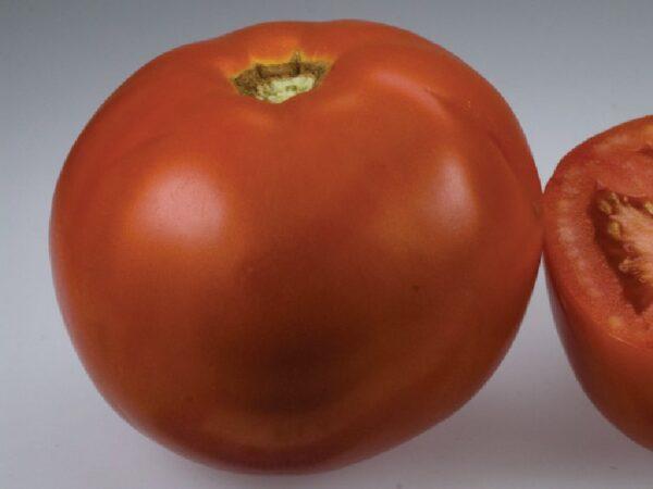 Florida paradajz 1