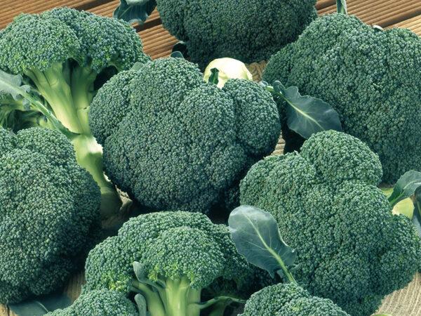 Ironmann F1 brokoli 2