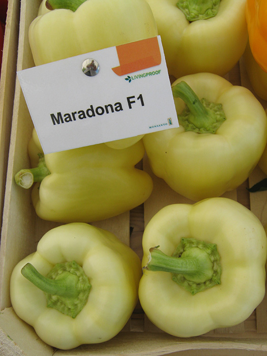maradonna vpaprika 3