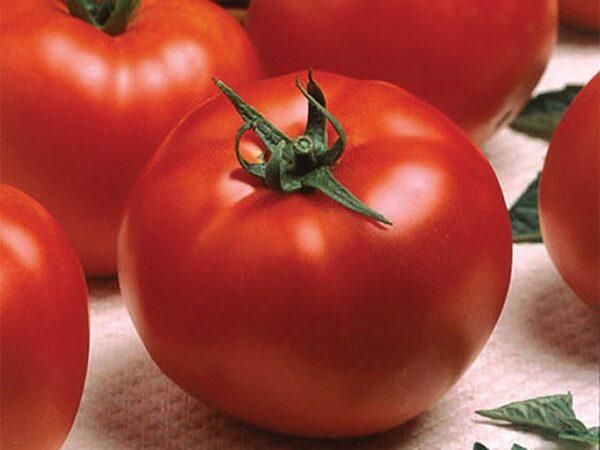optima paradajz 1