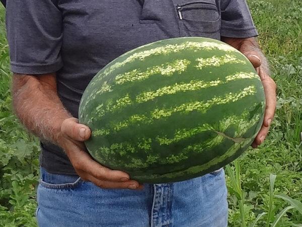 othello F1 - lubenica