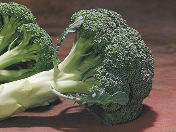 chevlier F1 brokoli 1